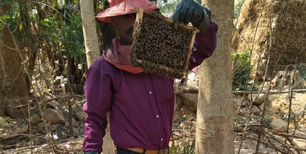 Forest fires, soaring heat to affect honey output from Similipal