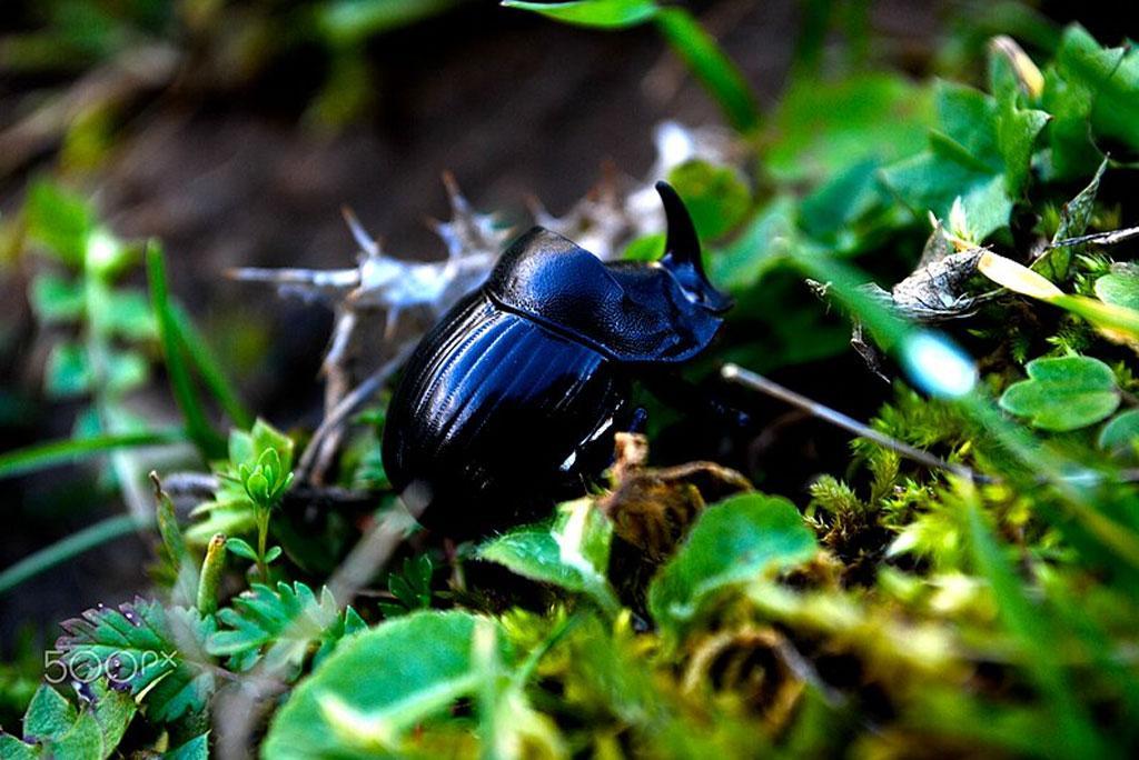 वैज्ञानिकों ने कीट नियंत्रण के लिए बनाया कृत्रिम कीट हार्मोन, लाभदायक जीवों और पर्यावरण को नहीं होगा नुकसान: शोध