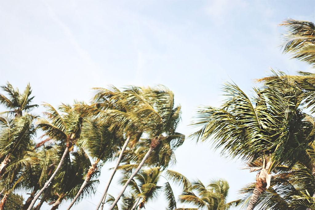 मौसम अपडेट: आज पंजाब, हरियाणा, चंडीगढ़, दिल्ली और उत्तरी राजस्थान में 20-30 किमी प्रति घंटे की दर से तेज सतही हवाएं चलने का अनुमान है