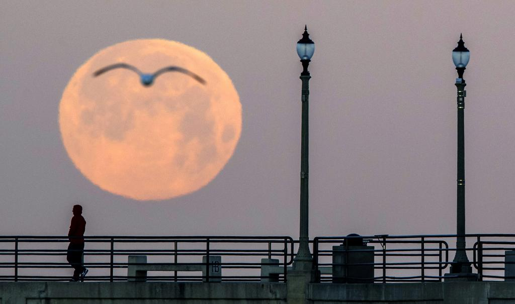 This April full moon is known as the pink moon because it heralds the arrival of spring flowers. Photo: Mark Rightmire / MediaNews Group / Orange County Register via Getty Images / The Conversation