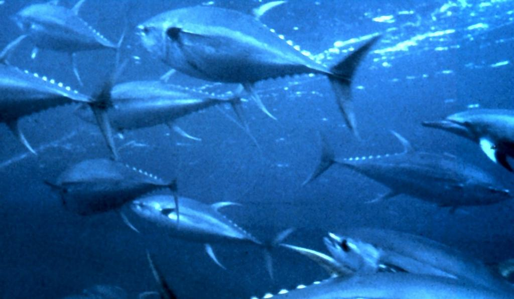 World Tuna Day 2021: The conservation of tuna is in humanity's interests