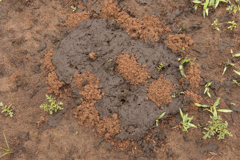 मिट्टी में सूक्ष्मजीवों के अधिक उतार-चढ़ाव से कार्बन उत्सर्जन बढ़ रहा है : अध्ययन
