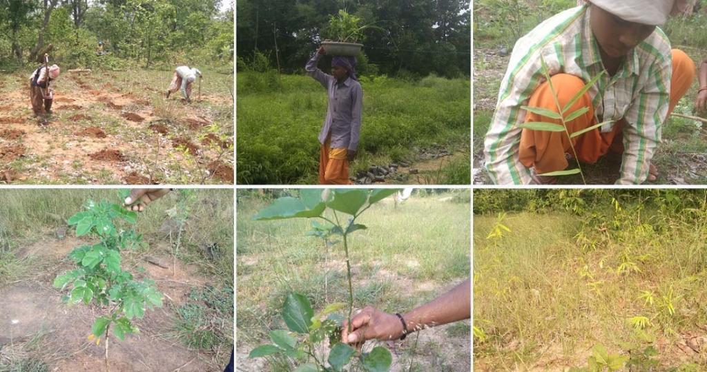 A collage of images from the tree plantation at Ramtek, Maharashtra. Photo: Grow-Trees.com