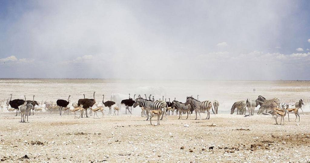 Wildlife in the Etosha National Park, Namibia. Photo: Yathin S Krishnappa via Wikimedia