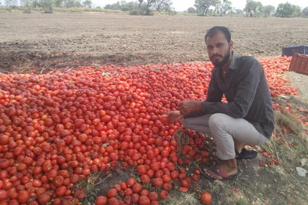 भैंरोपुर गांव के किसान हरिओम मीणा को सड़क पर ही टमाटर फेंकने पड़े। फोटो: रोकश मालवीय