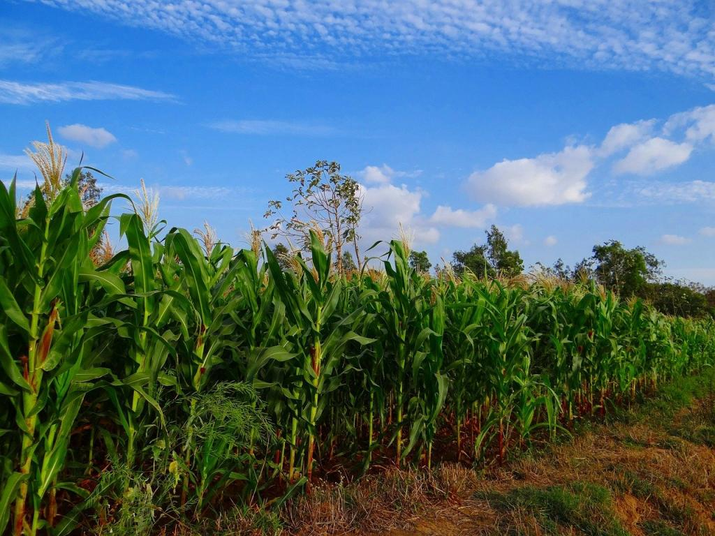 At least 40% global crop produce lost to pests every year, according to FAO. Photo: Pixabay
