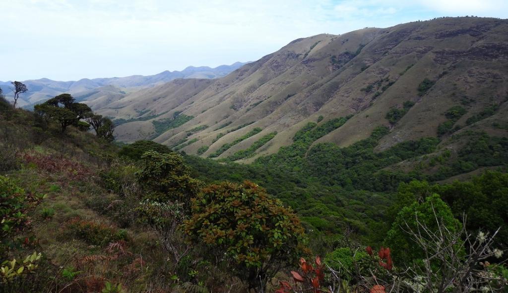The Shola grassland ecosystem of the Nilgiris. Photo: Sanket Bhale
