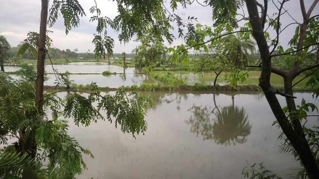 Cyclone Yaas inundated the fields in West Bengal. Photo: Gurvinder Singh