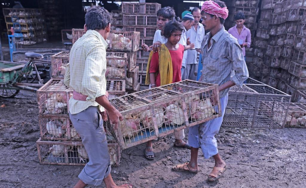 Poultry being sold at Ghazipur Mandi in East Delhi. Photo: Vikas Choudhary / CSE