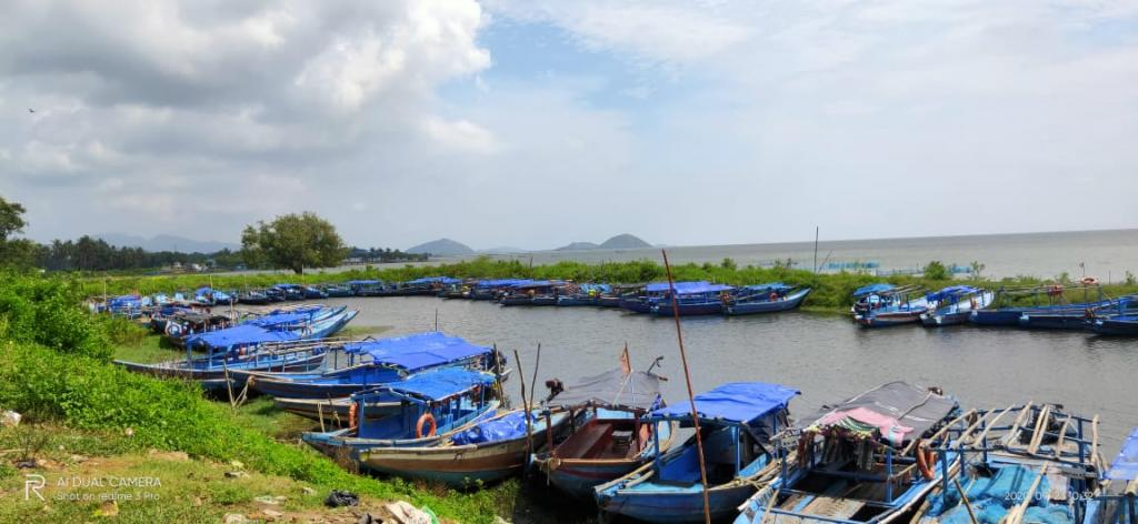 Boats anchored on the bank of Chilka, Barkul. Photo: By special arrangement