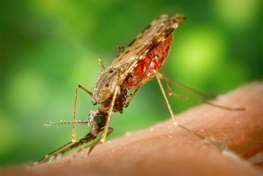 जलवायु परिवर्तन की वजह से सर्दियों में भी बढ़ रहा है मच्छरों का प्रकोप:अध्ययन