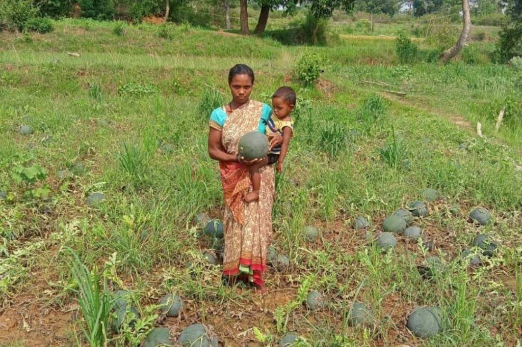 There are few takers for watermelons and fruits are rotting in the field, several farmers complained. Photo: Jharkhand Janadhikar Mahasabha