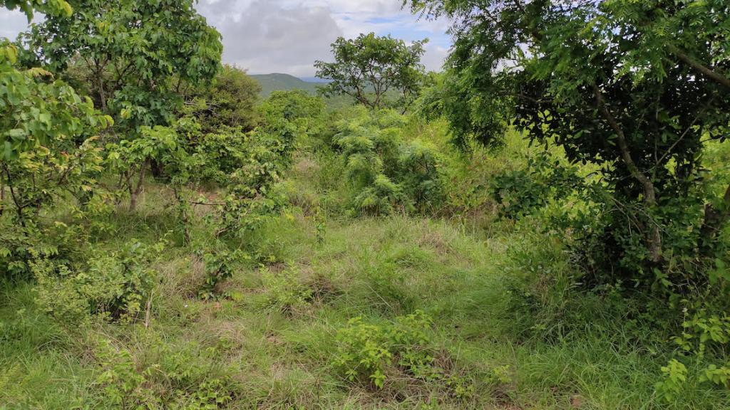 Why we need a road map for ecological restoration in India.