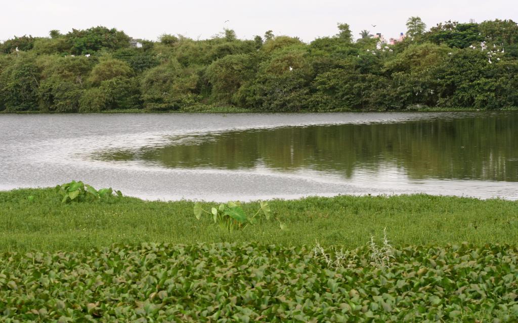 Madiwala lake, Bangaluru. The Karnataka High Court June 15, 2021 passed an order calling for decentralised governance of lakes in Karnataka. Photo: Wikimedia Commons