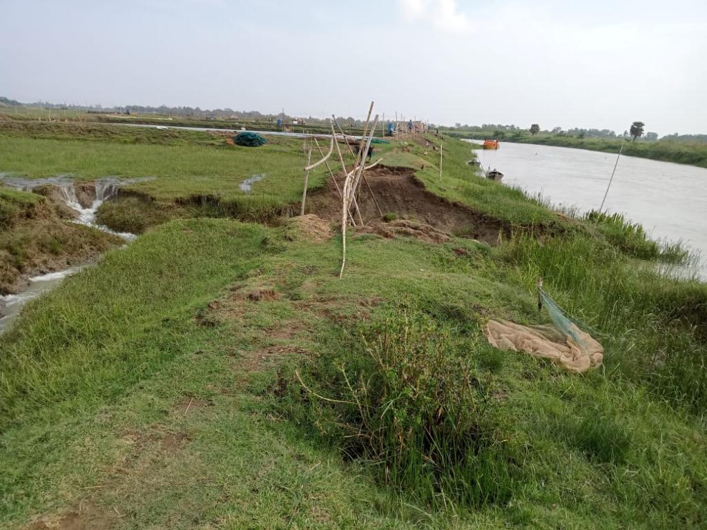 At least 5,882 hectares of cultivable lands in five blocks of Balasore district affected by sea water. Photo: By special arrangement