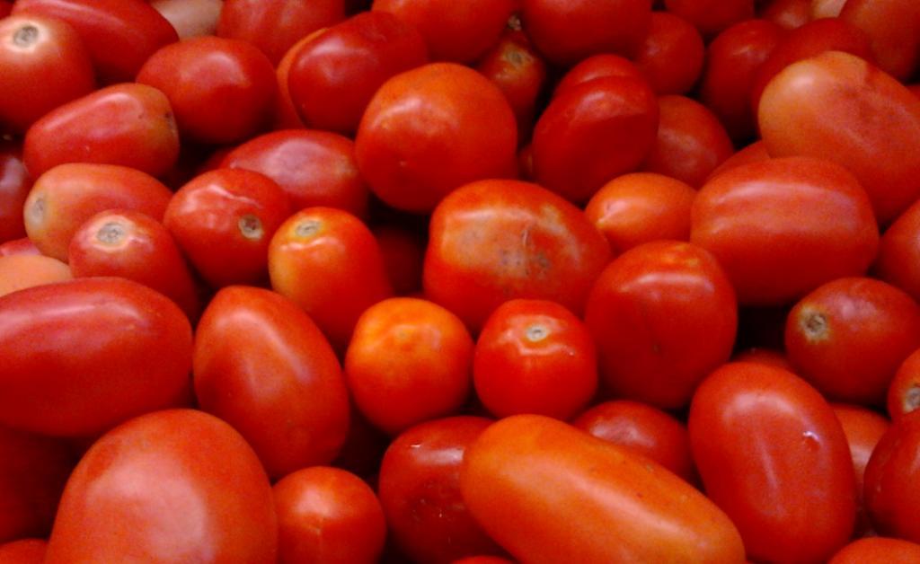 Roma or Bangalore tomatoes, an Indian hybrid variety. Photo: Wikimedia