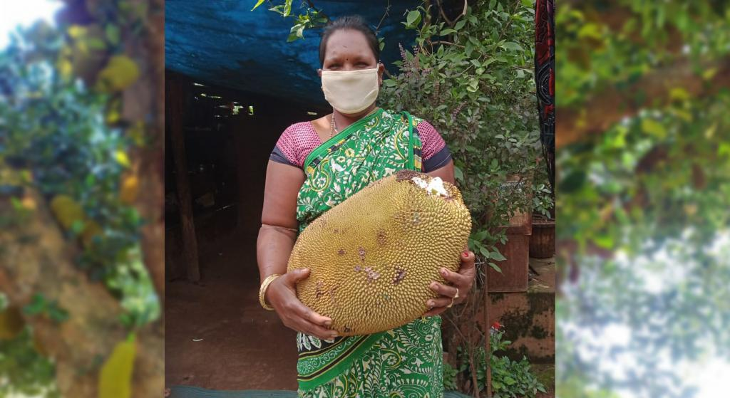"""Jackfruits are available aplenty in Boipariguda, Lamtaput, Nandapur, Dasmantpur, Narayanpatana, Semiliguda, Koraput, Jeypore  and Pottangi blocks  of the district. """"We are also receiving technical support from MS Swaminathan Foundation in Koraput block.  In absence of adequate marketing facilities, tribal people resorted to distress sale.  To annihilate the role of middlemen, we started  market linkage and training for around 1,000 tribal women  to prepare jack-fruit chips,"""" said Karthik, who works for ORMAS. Photo: Ashis Senapati"""