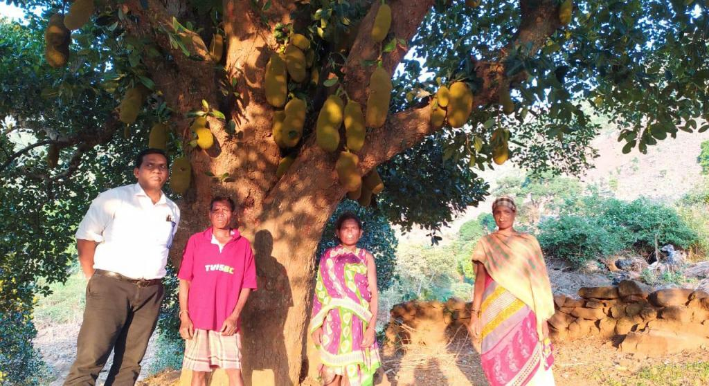 Fighting poverty: How jackfruit chips come to save Odisha tribals' day