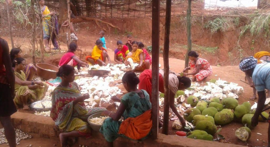 """The increased production of jackfruit-based food products is now finding market outside thestate as well, Karthik added. """"The powder of jackfruit seed is a rich source of dietary fiber, protein, carbohydrate, vitamins A, B, C and minerals,"""" he said. Photo: Ashis Senapati"""