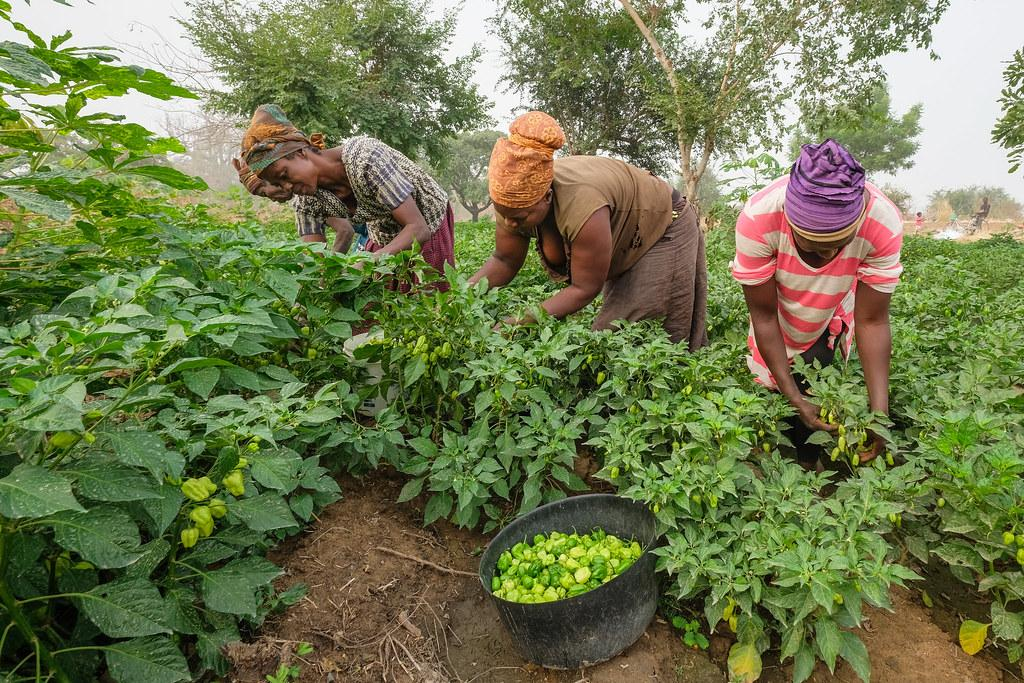 Make food systems more equitable for youth to address COVID-19 unemployment, says UN report. Photo: Flickr