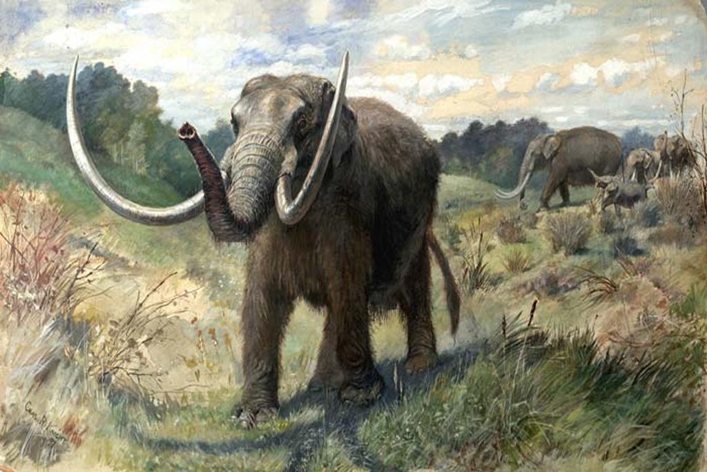 हाथी की प्रजातियों को गायब करने के लिए जिम्मेवार है जलवायु परिवर्तन