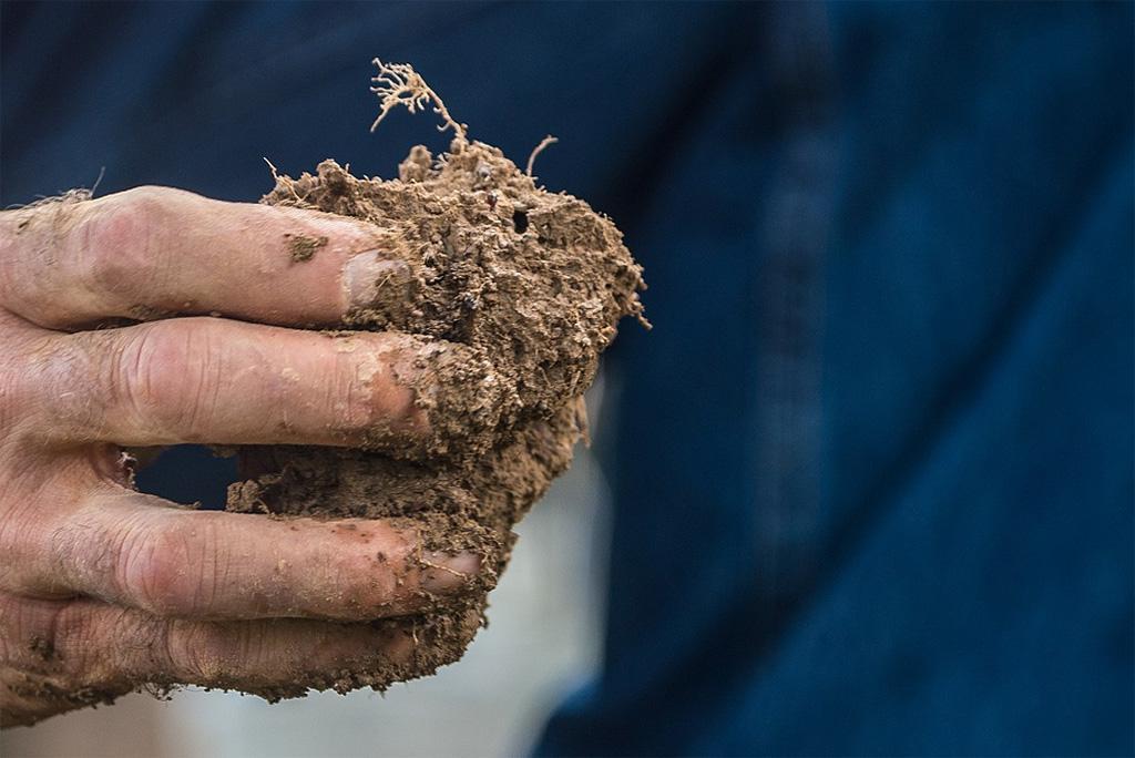 बढ़ता तापमान और ओजोन से पौधों पर हानिकारक असर पड़ता है, मिट्टी से कार्बन भी अधिक निकलती है