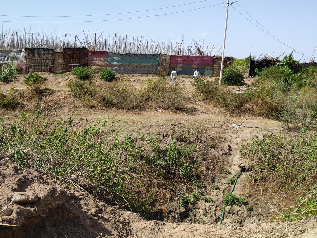 महोबा में पान की खेती सूखे से प्रभावित होने लगी है। फोटो : भागीरथ