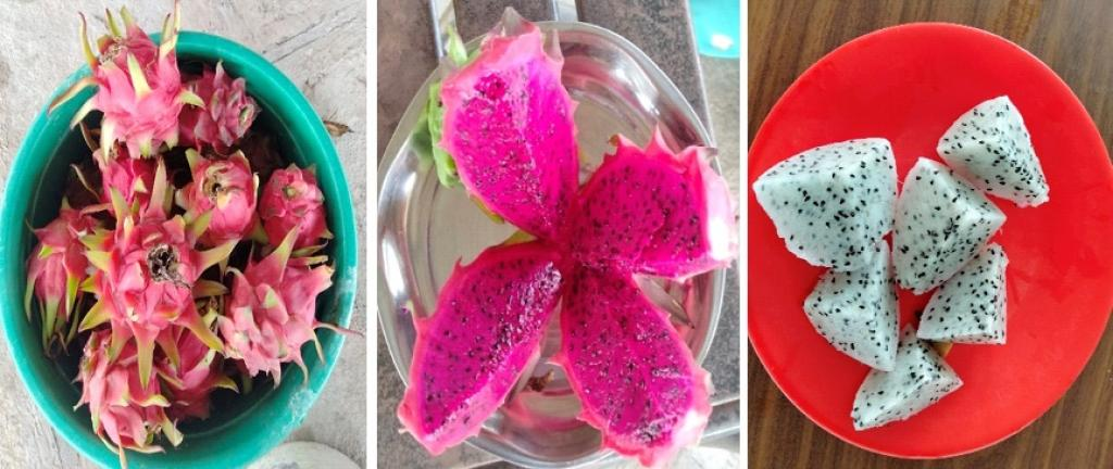 Dragon fruit varieties: red flesh with pink skin & white flesh with pink skin