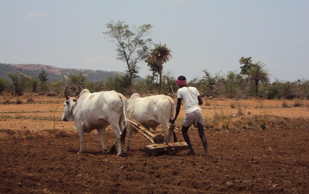 बारिश में कमी के कारण कई इलाकों में बुआई में देरी हो रही है। फोटो: मोयना, सीएसई