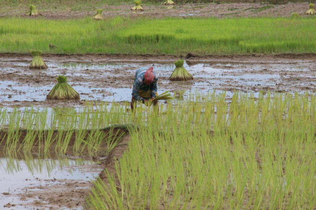 Climate change is real: Severe drought hits Assam's wet regions. Photo: Pixahive