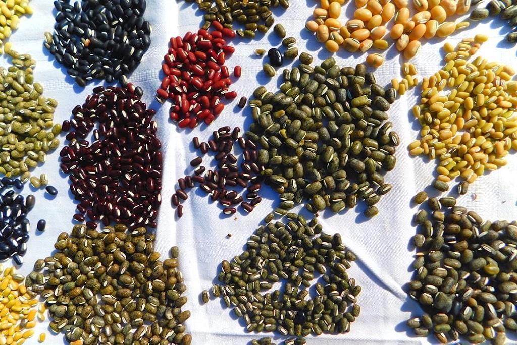 दालों की खपत के मुकाबले भारत में उत्पादन कम होता है। फोटो: सीएसई