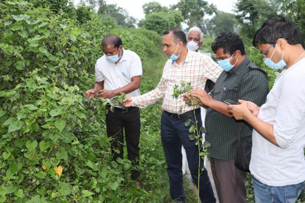 चकौडा में लगे रोग का निरीक्षण करते कृषि वैज्ञानिक