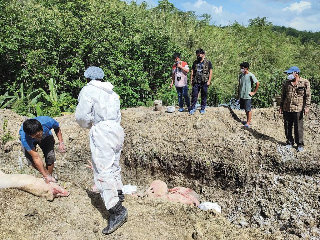 थानलियाना का सूअर फार्म मिजोरम के सबसे बड़े फार्म में शामिल है। यहां 300 से अधिक सूअर अफ्रीका स्वाइन फ्लू से मारे गए जिन्हें गड्डों में दफनाया गया (फोटो: एडम सप्रिंसांगा)
