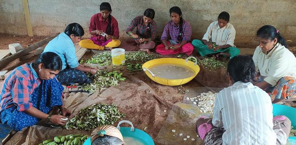 How Karnataka made homemade banana flour popular in India. Photo: Adike Patrike Collection