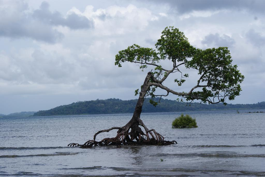 NASA's new tool makes it possible to see future possible sea level rise. Photo: Imaggeo