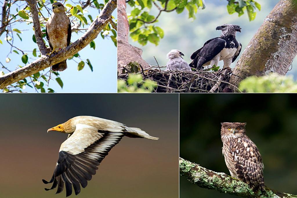 दुनिया भर में 30 फीसदी शिकारी पक्षियों की प्रजातियों पर मंडरा रहा है खतरा