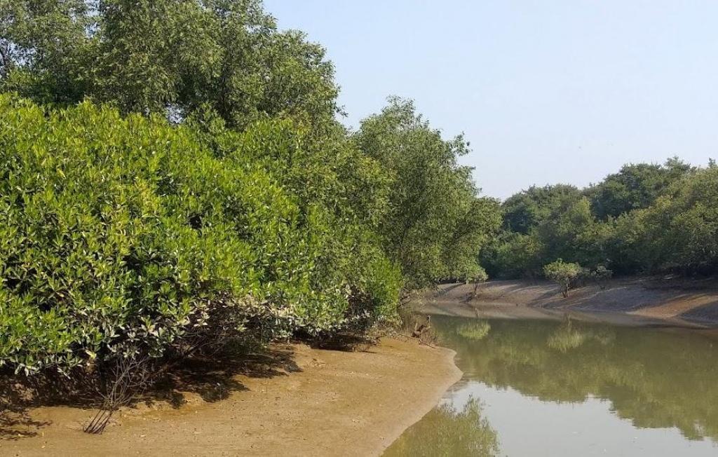 Bhitarkanika's mangrove forests. Photo: Ashis Senapati