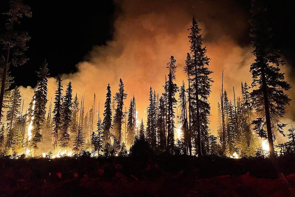 दक्षिण पूर्व एशिया में जंगल की आग से हर साल समय से पहले हो रही हैं 59 हजार मौतें