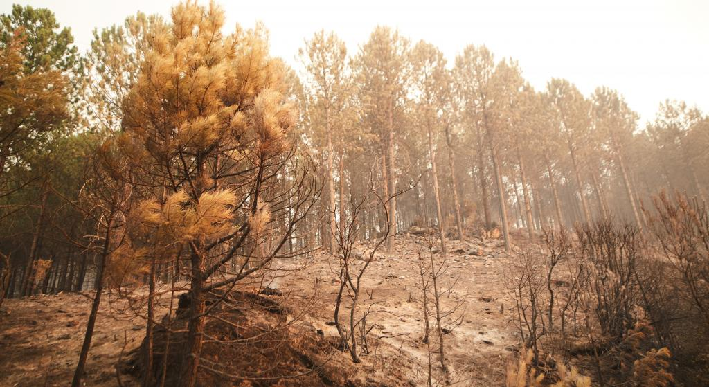 In Muğla Kozağaç Mountains, Turkey, after a forest fire was extinguished. Turkey wildfires were a series of over 200 wildfires that burnt 1,700 square kilometres of Turkey's forest in its Mediterranean Region in July and August 2021,  the worst ever wildfire season in the country's history. Photo: iStock