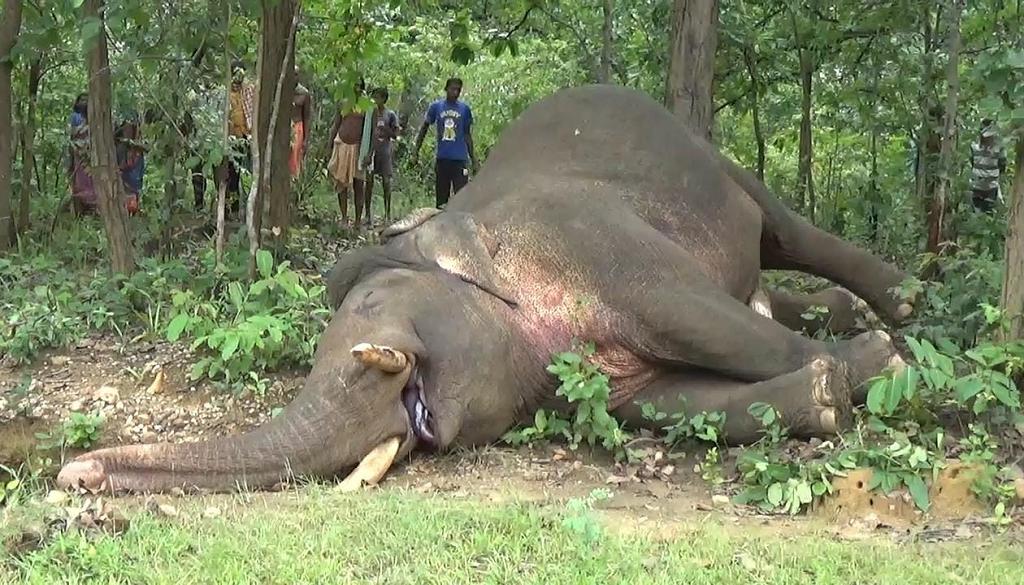 Odisha lost 282 elephants in 3 years