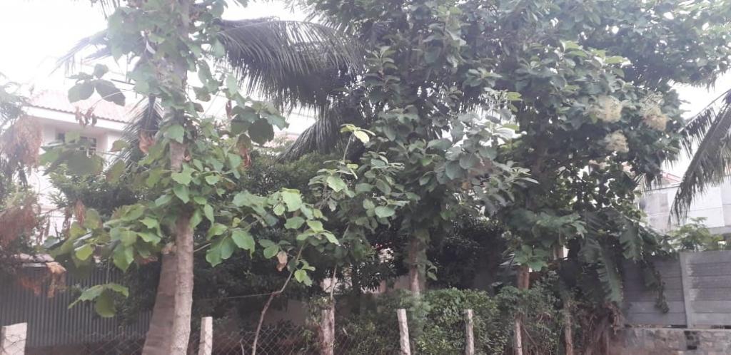 The author's home garden in Tiruchirappalli. Photo: V Sundararaju