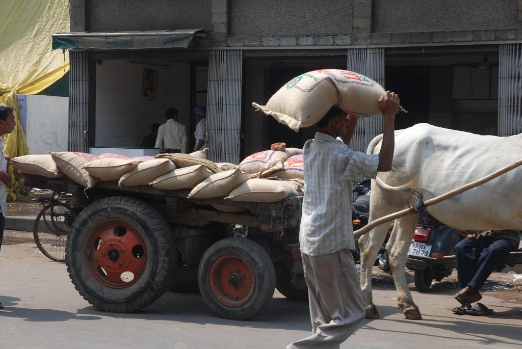 किसान धान, गेंहू और अरहर दाल समेत 18 प्रकार की फसलों का 55 से 93 फीसद स्थानीय बाजारों में बेचते हैं। फोटो: अग्निमीर बासु