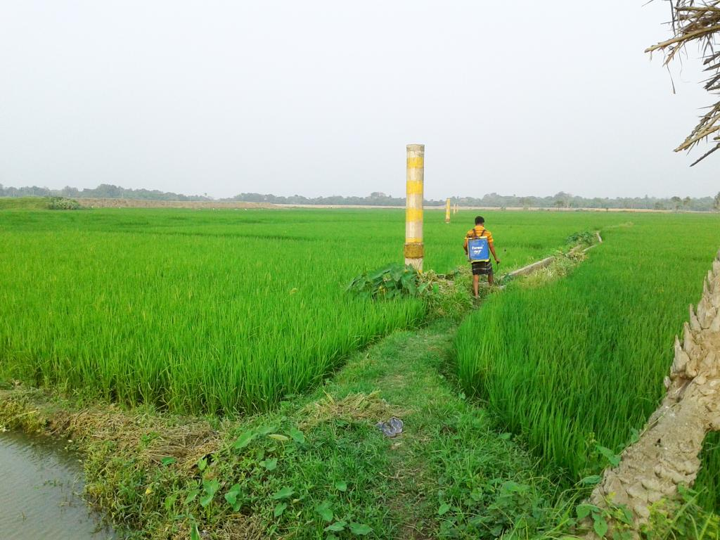 Arsenic now in wheat, potato — and more than that in drinking water — in rural Bihar. Photo: Wikimedia Commons