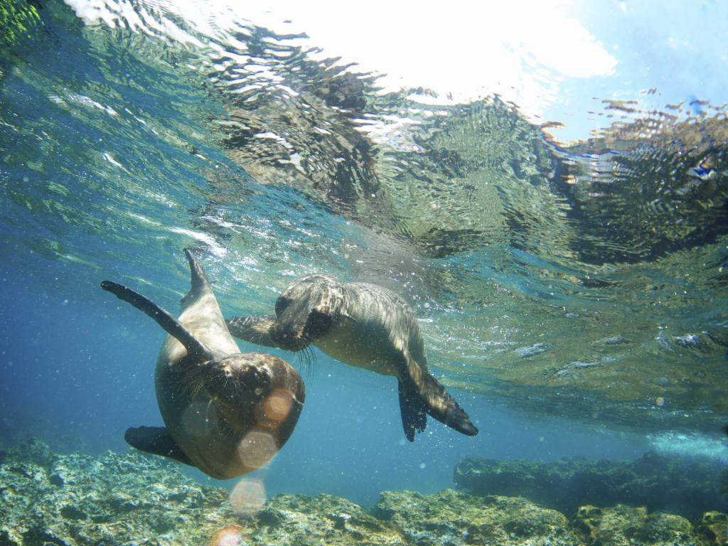 Conflict between seal, sea lion populations and fishing communities has been on the rise in west coast of South America, according to a study. Photo: iStock