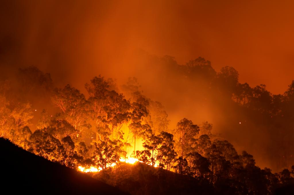 Over 33,000 died every year of pollution due to wildfires in 17 years. Photo: iStock