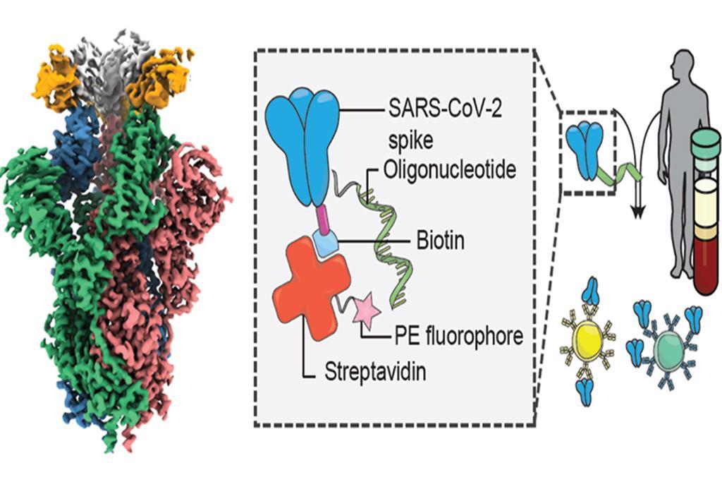कोविड-19 वेरिएंट के खिलाफ हुई शक्तिशाली एंटीबॉडी की खोज