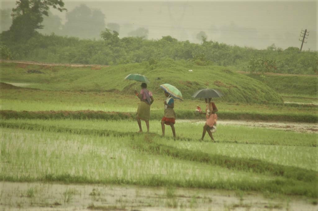 Sri Lanka's inorganic transition to organic farming. Photo: Agnimirh Basu