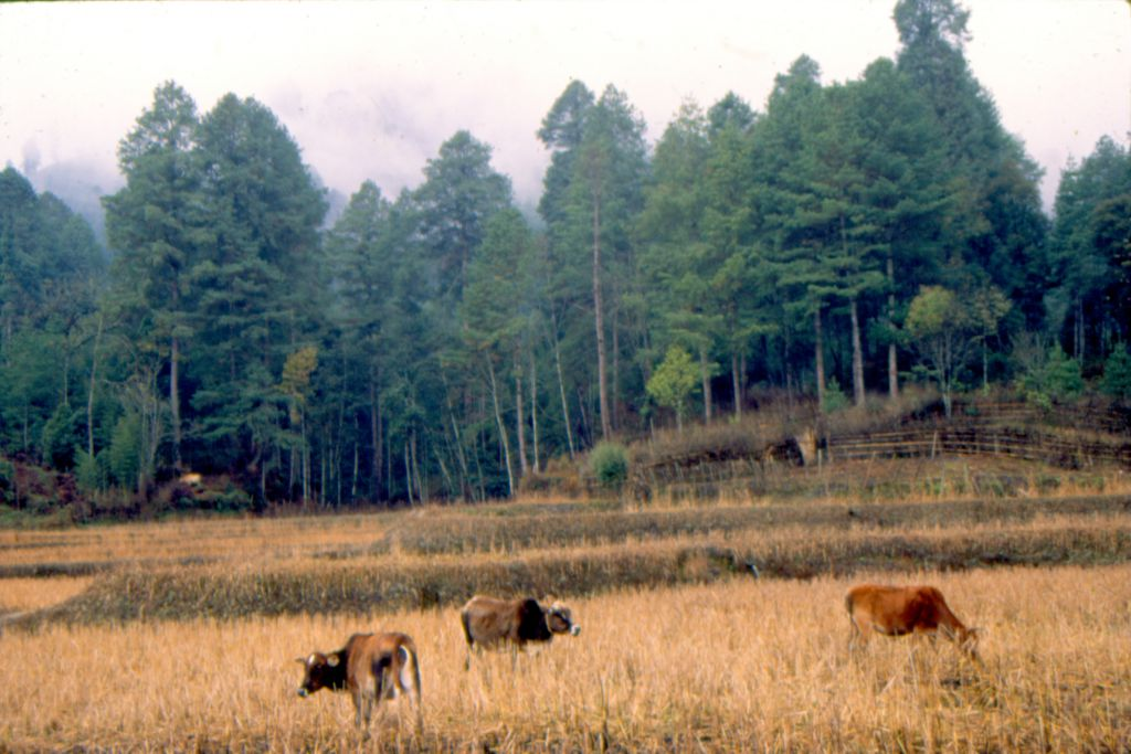 Grasslands intensively managed by humans have become a net source of greenhouse gas emissions