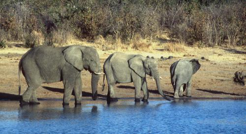 Last year, the Zimbabwe government faced scrutiny for selling elephants to China