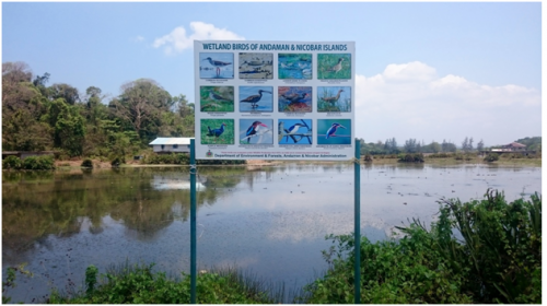 Posters of wetland birds put up by the forest department in Sippighat 